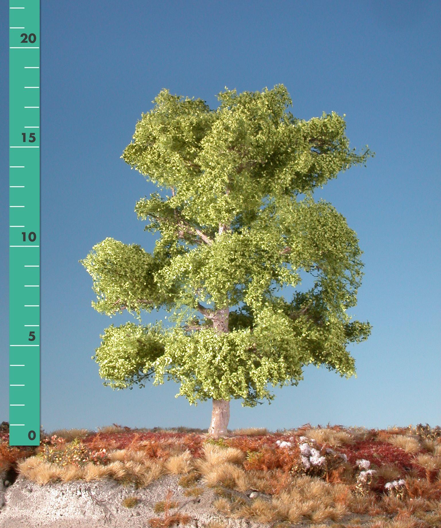 buche 1 160 220 fr hling modellbaum miniaturmodelle b ume pflanzen belaubung. Black Bedroom Furniture Sets. Home Design Ideas